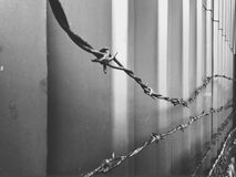 Barbed wire Stock Images