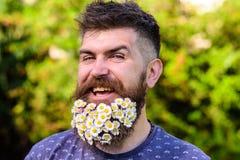 Barbeiro e conceito do penteado Homem com barba e bigode na cara de sorriso alegre, fundo verde, defocused bearded imagem de stock