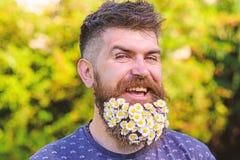 Barbeiro e conceito do penteado Homem com barba e bigode na cara de sorriso alegre, fundo verde, defocused bearded fotografia de stock royalty free