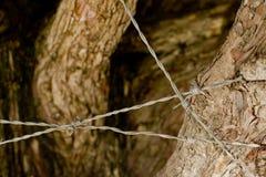 Barbelé autour d'arbre Photographie stock libre de droits