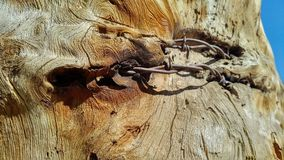 Barbelé dans l'arbre Images stock