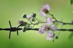 Barbelé et fleur Photo stock