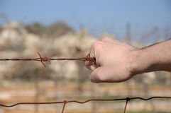 Barbelé rouillé dans la main d'un homme Photographie stock libre de droits