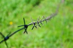 Barbelé sur le fond de l'herbe verte photos libres de droits