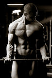 Barbell biceps curls. Artistic training shot of young muscular man in the gym - barbell biceps curls Stock Images