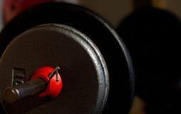 Barbell mit Gewichten Lizenzfreies Stockfoto