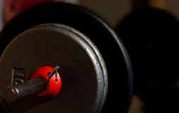 Barbell with weights Royalty Free Stock Photo