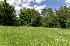 Barbelure avec l'herbe verte en parc ensoleillé d'été vert image stock