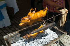 Barbeque Cuy (Guinea pig) Royalty Free Stock Image