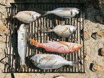 Barbeque-grill. Couple of fresh cached fishes from clear Adriatic sea, readi for barbeque or domestic gradela Stock Photos