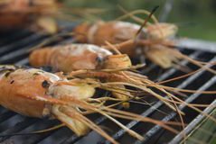 Barbeque shrimp Royalty Free Stock Image