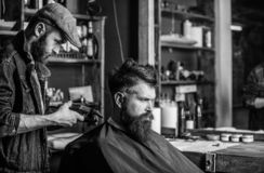 Barber with clipper trimming hair on nape of client. Hipster client getting haircut. Barber with hair clipper works on. Haircut of bearded guy barbershop royalty free stock photos