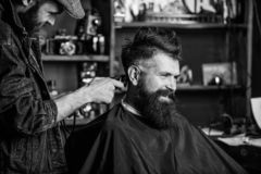 Barber with clipper trimming hair on nape of client. Barber with hair clipper works on haircut of bearded guy barbershop. Background. Hipster client getting royalty free stock photos