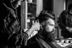 Barber with hair clipper works on hairstyle for bearded man barbershop background. Barber styling hair of brutal bearded. Barber with hair clipper works on royalty free stock photo