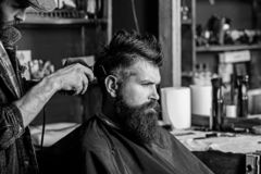 Barber with hair clipper works on hairstyle for man with beard, barbershop background. Barber styling hair of bearded. Barber with hair clipper works on royalty free stock photo