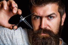 Barber scissors, barber shop. Brutal male, hipster with moustache. Male in barbershop, haircut, shaving. Portrait of. Stylish beard man, scissors. Bearded man stock image