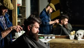 Barber styling hair of bearded client with comb and clipper. Barber with hair clipper works on hairstyle for man with. Barber styling hair of bearded client with stock photo
