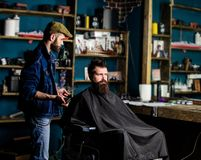Barber styling hair of bearded client with comb and clipper. Hipster client getting haircut. Haircut concept. Barber. With hair clipper works on hairstyle for royalty free stock images