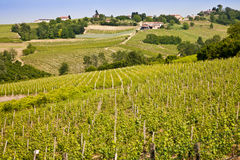 Barbera vineyard - Italy Royalty Free Stock Photo