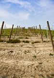 Barbera vineyard - Italy Stock Images