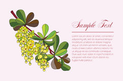 Barberry branch Royalty Free Stock Images