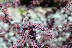 Barberry soon bloom. A small DOF ,  bushes Stock Image