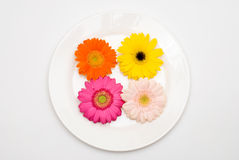 Barberton daisy on the plate Stock Photography