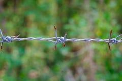 barbet Fotografia Royalty Free