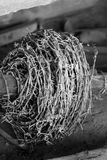 Barbeta drut Fotografia Stock