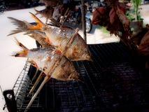Barbeta Fishs prażak stawiający w Bambusowych kijach obrazy stock