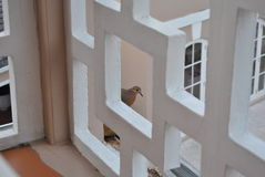 Barble dove in a frame. A barble dove at a balcony stock photo