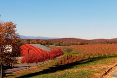 Виноградники Barboursville осенью Стоковая Фотография RF