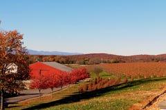 Barboursville vingårdar i nedgången Royaltyfri Fotografi