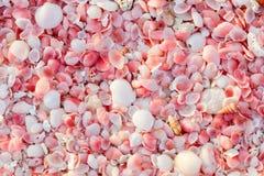 Barbuda pink sand beach Royalty Free Stock Photos