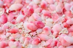 Barbuda pink sand beach. Pink sand beach on Barbuda island in Caribbean made of tiny pink shells, close up photo royalty free stock photos
