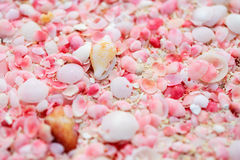 Barbuda pink sand beach. Pink sand beach on Barbuda island in Caribbean made of tiny pink shells, close up photo royalty free stock image