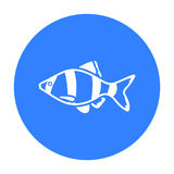 Barbus fish icon black. Singe aquarium fish icon from the sea,ocean life black. Stock Photo
