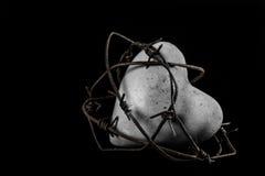 Barbwire心脏,黑白 免版税库存图片