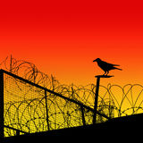 Barbwire Royalty Free Stock Photo