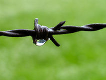 Barbwire Stock Image