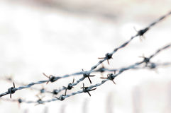 Barbwire abstract Royalty Free Stock Image