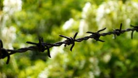 Barbwire against green background royalty free stock photo
