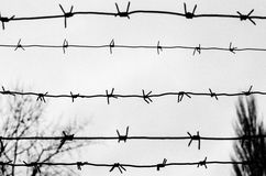 Barbwire. Barbed wire fence as preventing Stock Photo