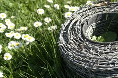 Barbwire and daisy flowers on a meadow Royalty Free Stock Photo