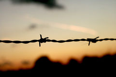 Barbwire at dawn Stock Photos