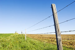 Barbwire fence. Perspective of a barbwire fence separating two farmlands Stock Images