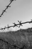 Barbwire fence Stock Photos