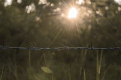 Barbwire in the forest Royalty Free Stock Images