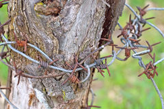 Barbwire over tree Stock Photo