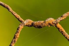 Barbwire oxidado foto de stock royalty free